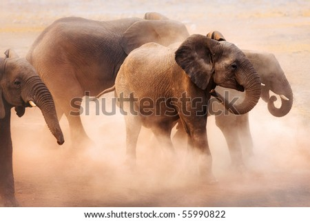 Agitated elephants creating a lot of dust in Etosha desert - stock photo