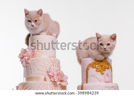Agreeable pets on tops of sweet confection. Nice ginger fur and gentle paws. Sweet decoration on cakes.