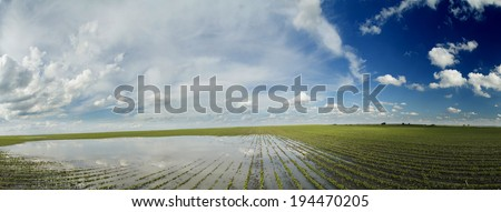 Agricultural disaster, panorama shot of flooded soybean crops. - stock photo