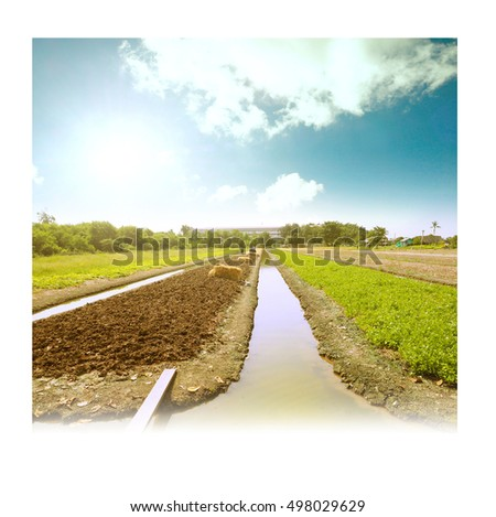 Agricultural fertilizers organic vegetable garden or planting lettuce landscape have a nice sky retro or vintage color tone in frame white color concept design is some times in memory.