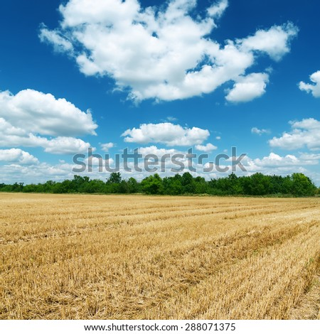agricultural field after harvesting under deep blue sky with clouds - stock photo