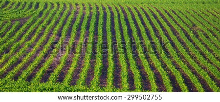 Agricultural Field in the Summer