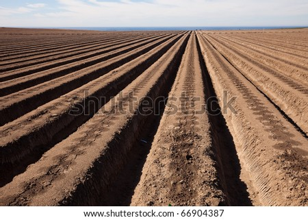 Agricultural field is ready for planting lettuce - stock photo