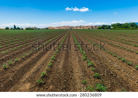 agricultural field on a sunny day in California