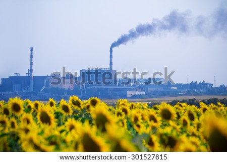 Agricultural field sown sunflowers and smoke from the chimney of chemical factory rises into the sky, polluting the atmosphere - stock photo