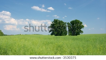 Agricultural field with blue sky and white clouds and two trees