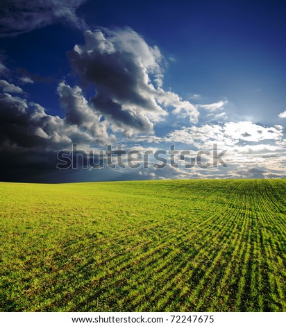 agricultural field with green grass under deep blue sky with clouds in sunset - stock photo
