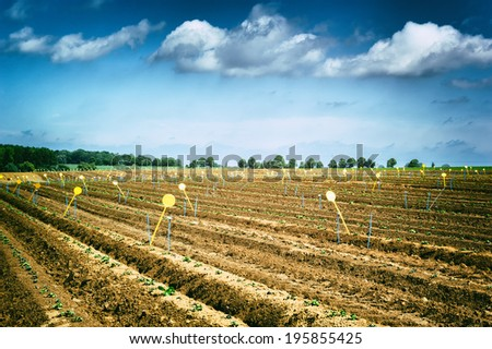 Agricultural field with green sprouts  - stock photo