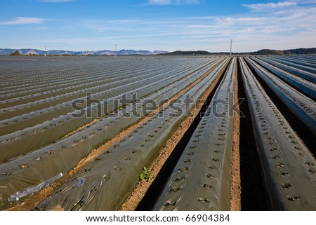 Agricultural field with recently planted lettuce - stock photo