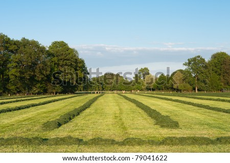 agricultural field with rows of grass drying in the sun