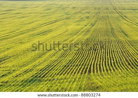 Agricultural field with young plants