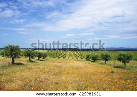Agricultural fields, Alentejo region, Portugal
