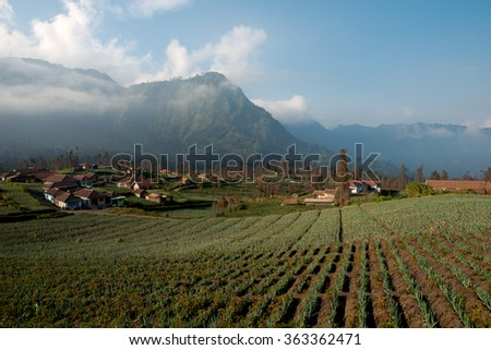 Agricultural  Fields,  Cemoro Lawang, East Java, Indonesia - stock photo