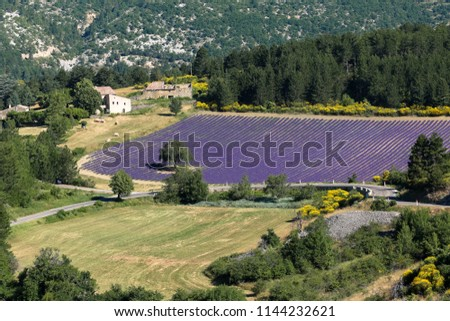 Agricultural fields of lavender near the town of Aurel in France