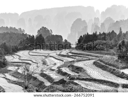 Agricultural fields. Zhangjiajie National Forest Park was officially recognized as a UNESCO World Heritage Site - China (black and white)