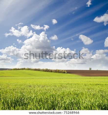 agricultural green field - stock photo
