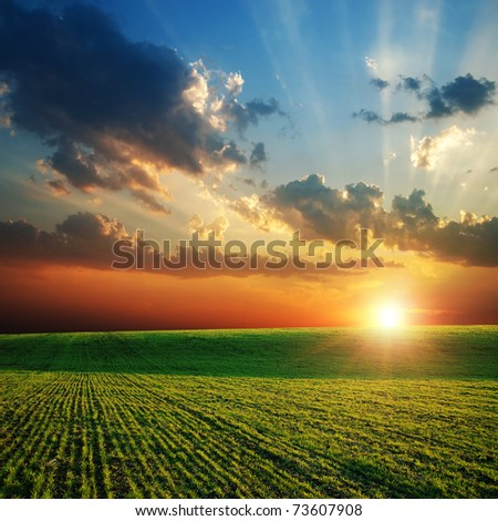 agricultural green field and sunset - stock photo