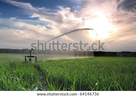agricultural irrigation on a summer evening