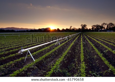 Agricultural Irrigation Sprinkler - Rural Farm Scene An agricultural irrigation and watering sprinkler system with young crop growth, as shot at sunset in South East QLD, Australia - stock photo
