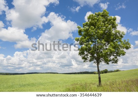 Agricultural landscape, green meadow with lonely tree, blue sky on the horizon. Beautiful summer weather.