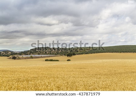 Agricultural landscape in a cloudy day, with a irrigation reservoir beside a barley field and olive groves at background - stock photo