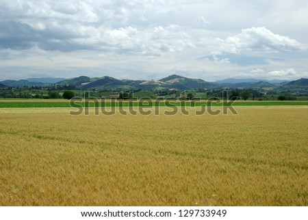 Agricultural landscape in Lombardy region of Italy - stock photo
