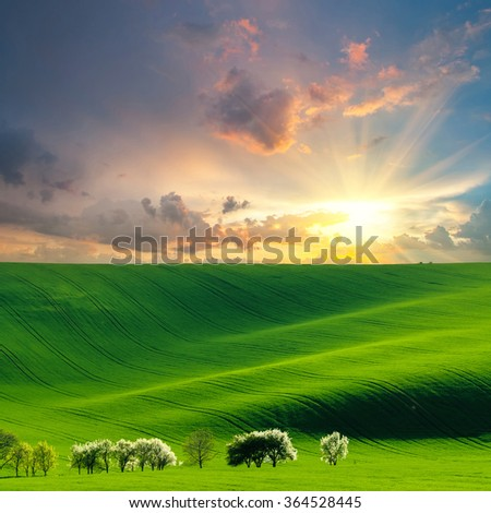 Agricultural landscape with green field and blooming trees, farmland