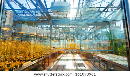 Agricultural plants in a greenhouse, the scientific selection of GMOs