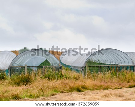 Agricultural plastic foil tunnel hothouses in grassy farmland landscape