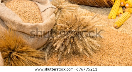 Agricultural product assortment, cereals in sacks, corn cob in basket and variety of cereal grains on ground
