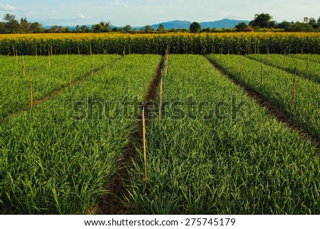 Agricultural products of vegetable farmers in rural areas. - stock photo
