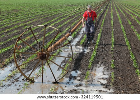 Agricultural scene, farmer in paprika field and irrigation system - stock photo