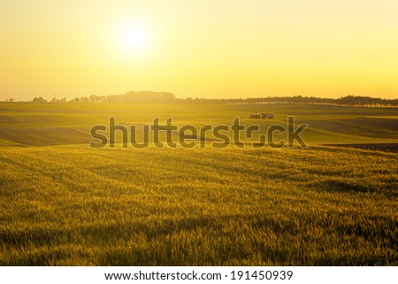 Agricultural scene in sunset - stock photo
