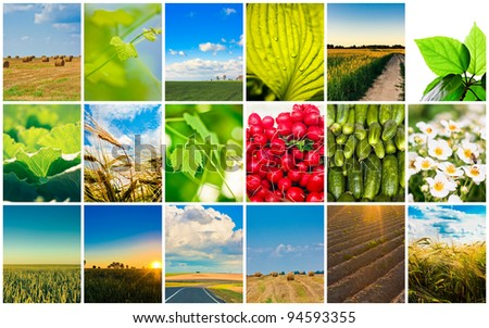 Agricultural set. Agriculture or harvest collage / Harvest concepts. Cereal collage - stock photo