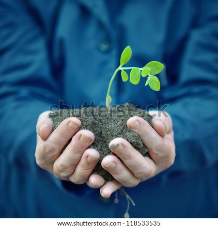 Agricultural worker holding plant growing in soil. Spring, growth, new life, ecology, environmental, nature preservation concept