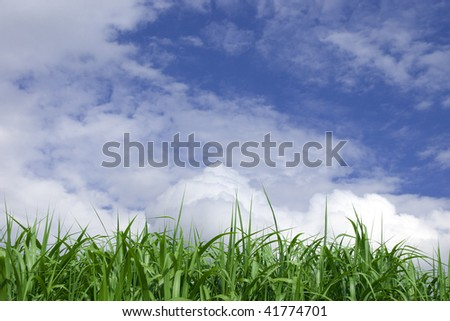 Agriculture and clouds