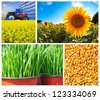 Agriculture background, collection or collage, farming plants. - stock photo