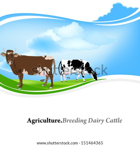 Agriculture.Breeding dairy Cattle - stock photo