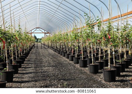 Agriculture business in rural Oregon seedling plants growers inside outside. - stock photo