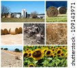 Agriculture collage - a collage of photos about agriculture theme - stock photo