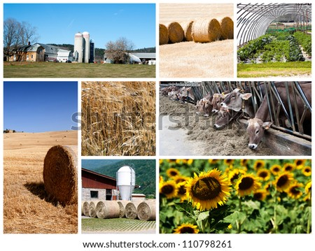 Agriculture collage - a collage of photos about agriculture theme