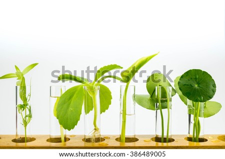 Agriculture concept, Close-up of Plant in the Test Tube - stock photo