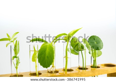 Agriculture concept, Close-up of Plant in the Test Tube