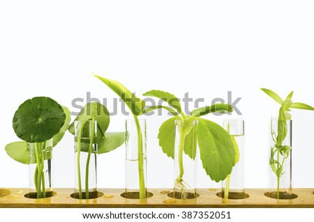 Agriculture concept, Close-up of Plant in the Test Tube Isolated - stock photo