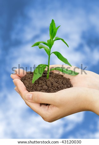 agriculture concept. plant in a hands over blue