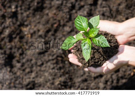 Agriculture concept: planting new seedlings into soil - stock photo