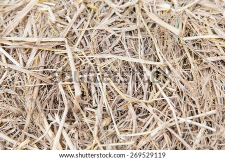 agriculture, ecology and drought concept - dry grass or hay texture - stock photo
