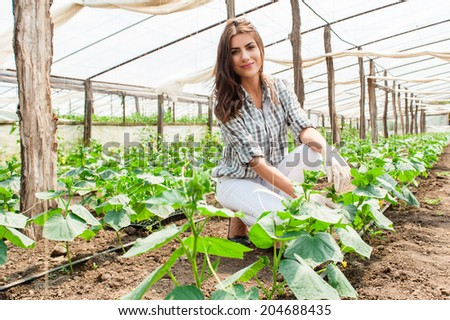 Agriculture farm woman worker in greenhouse. - stock photo