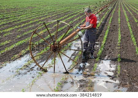 Agriculture, farmer  inspect paprika field with irrigation system using  tablet - stock photo