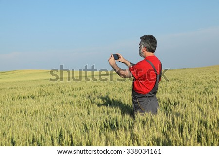 Agriculture, farmer photographing wheat plant in field, using mobile phone - stock photo